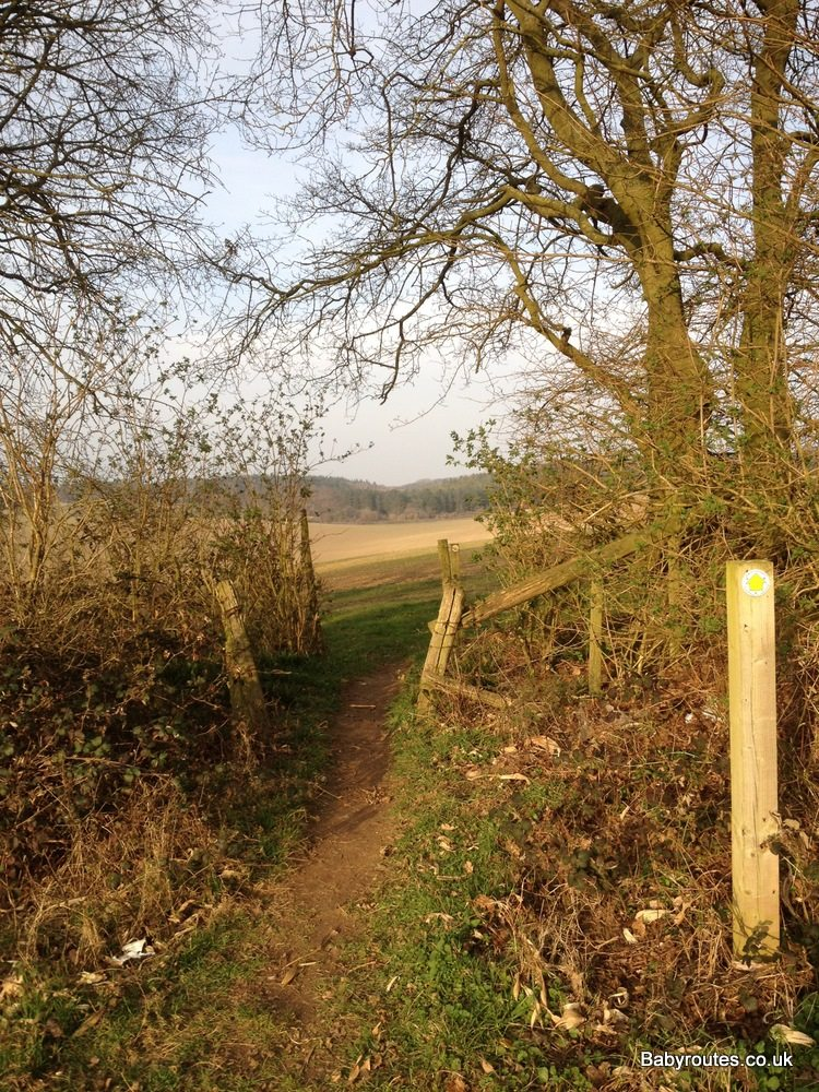 Woods and fields, Binfield Wildlife and Woodlands Walk