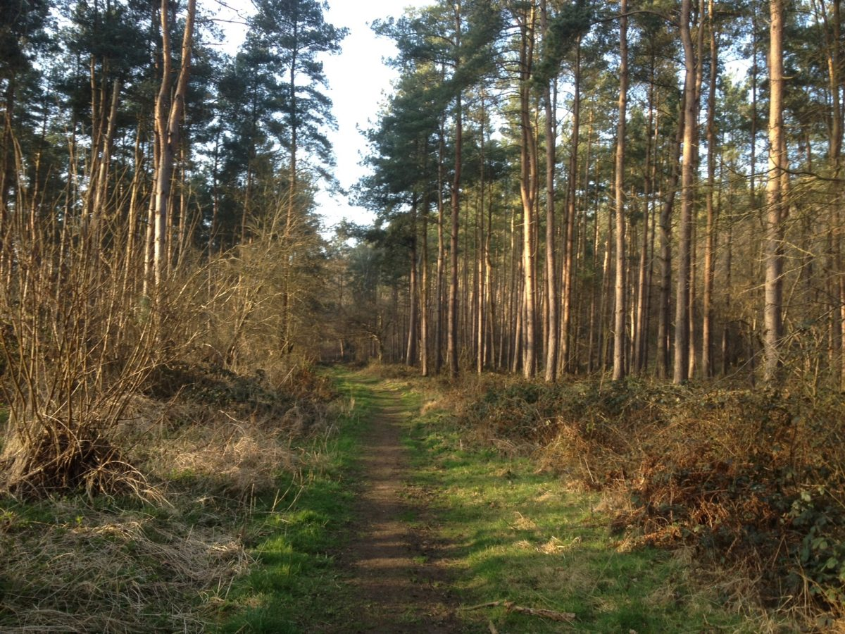 woodland path through Flowercroft Wood, Rotherfield Peppard