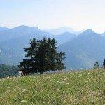 Walking in the Swiss Alps