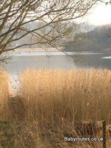 View across reed beds at Chew Valley Lake towards Denny Island