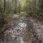 Muddy path in New Copse, Sonning Common Woodland Walk