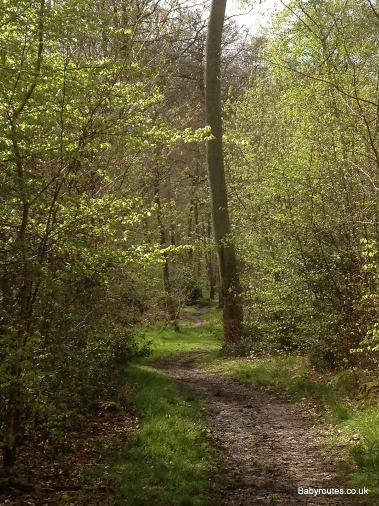 New Copse, Sonning Common Woodland Walk