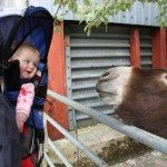 Baby and donkey