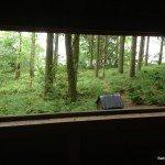Red Squirrel Hide, Leaplish Waterside Park