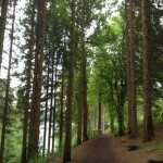 View through trees and woodland path, Lakeside Trail, Kielder Water. Near Leaplish Waterside Park.