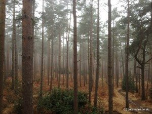 A moody Swinley Forest, Bracknell, on a misty day.
