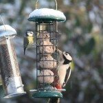 Woodpecker and blue tit on feeder in snow