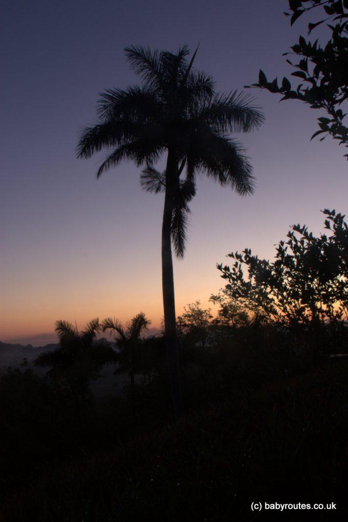 Palm tree at sunset, Vinales, Pinar del Rio, Cuba
