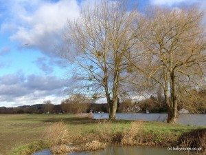 Cookham Thames Path Walk