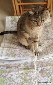 Cat playing with string on a map
