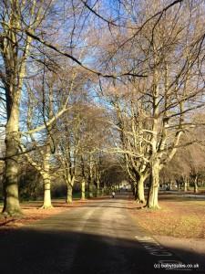 Avenue of trees, Clifton Suspension Bridge Walk