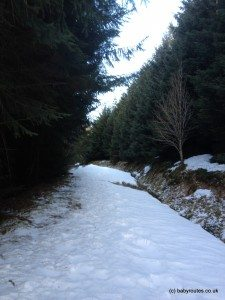 Forest trail, Glenlochsie Lodge & forest walk, Spittal of Glenshee, Cairngorms, Scotland