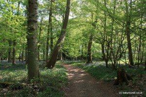 Bluebells woods walk