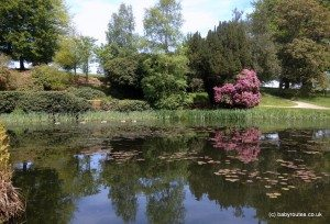 Duck pond at Scotney Castle