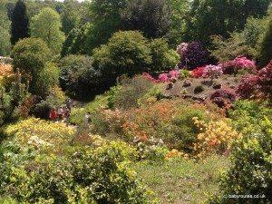 Quarry Garden, Scotney Castle.