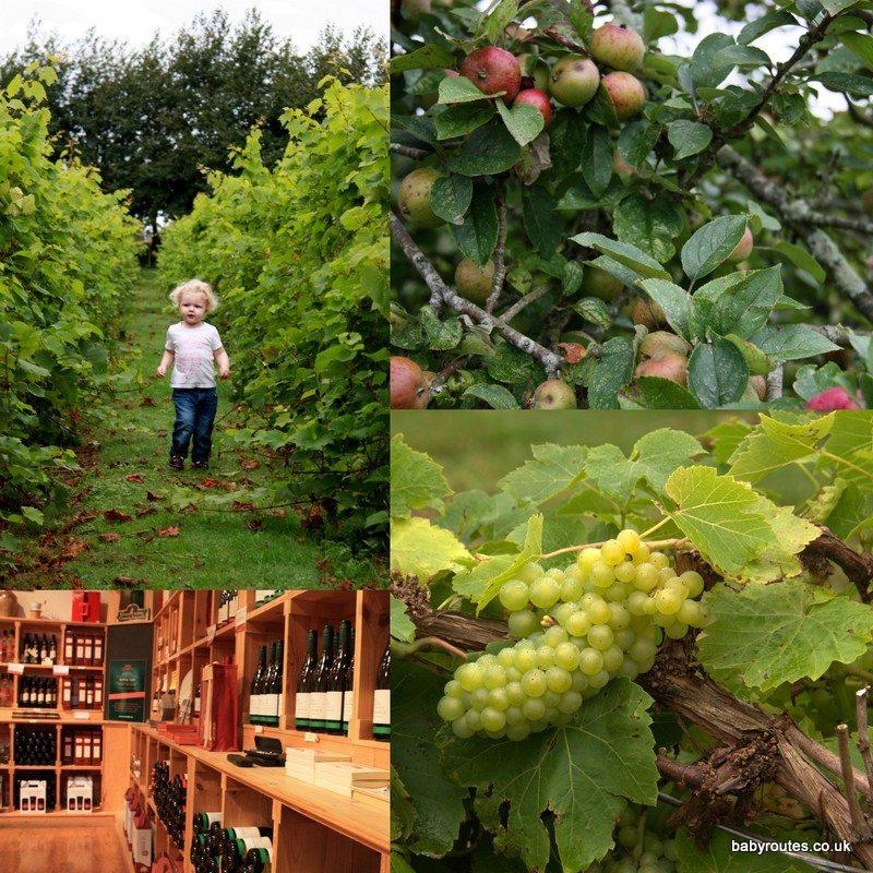 La Mare Wine Estate, Jersey