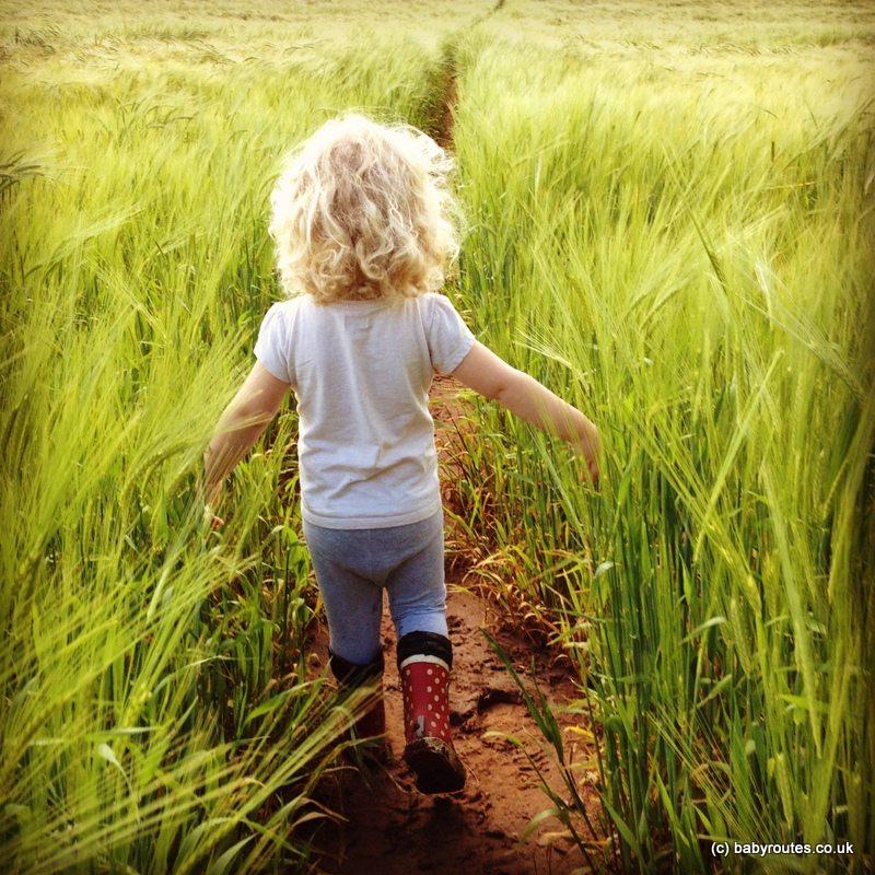 Walking through fields of green, Stanton Drew to Chew Magna Walk