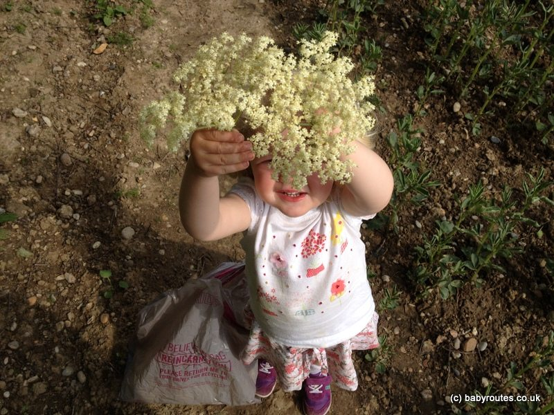 1 photo 1 3 Copy Hedgerow Harvest: How to make elderflower cordial