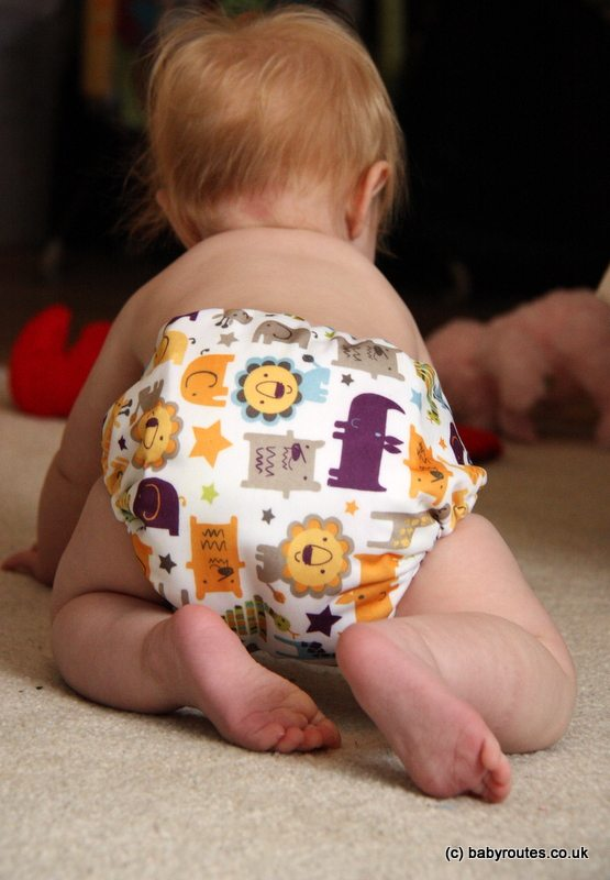Reusable nappies, Blueberry