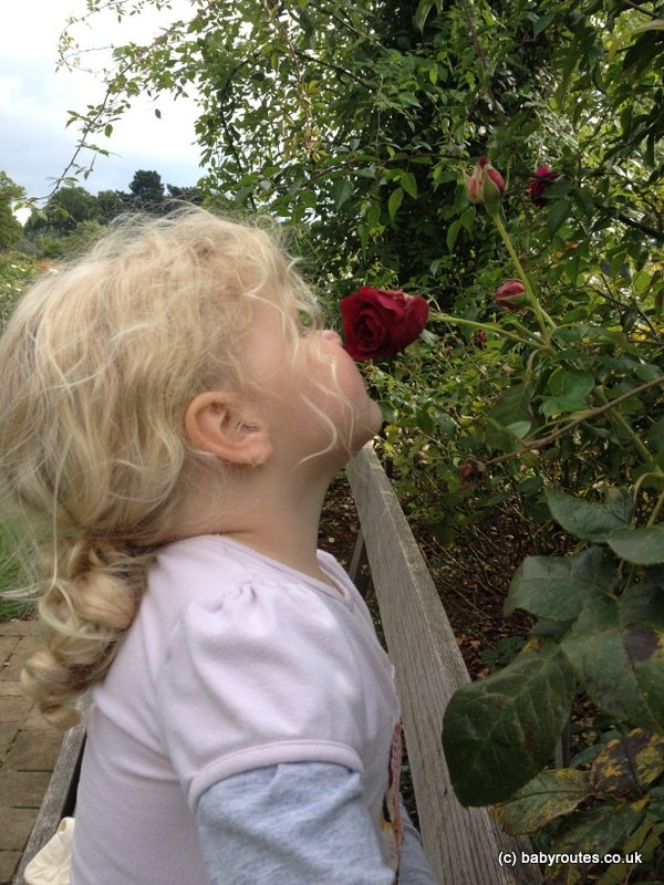 The last rose of summer? Baby Routes