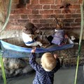 The Wind in the Willows Exhibition, River and Rowing Museum Baby Routes Review,, Henley-on-Thames
