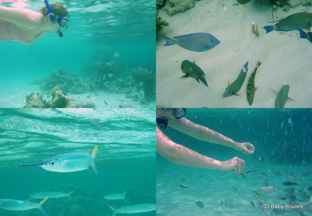 Snorkelling in Cuba and baby swimming