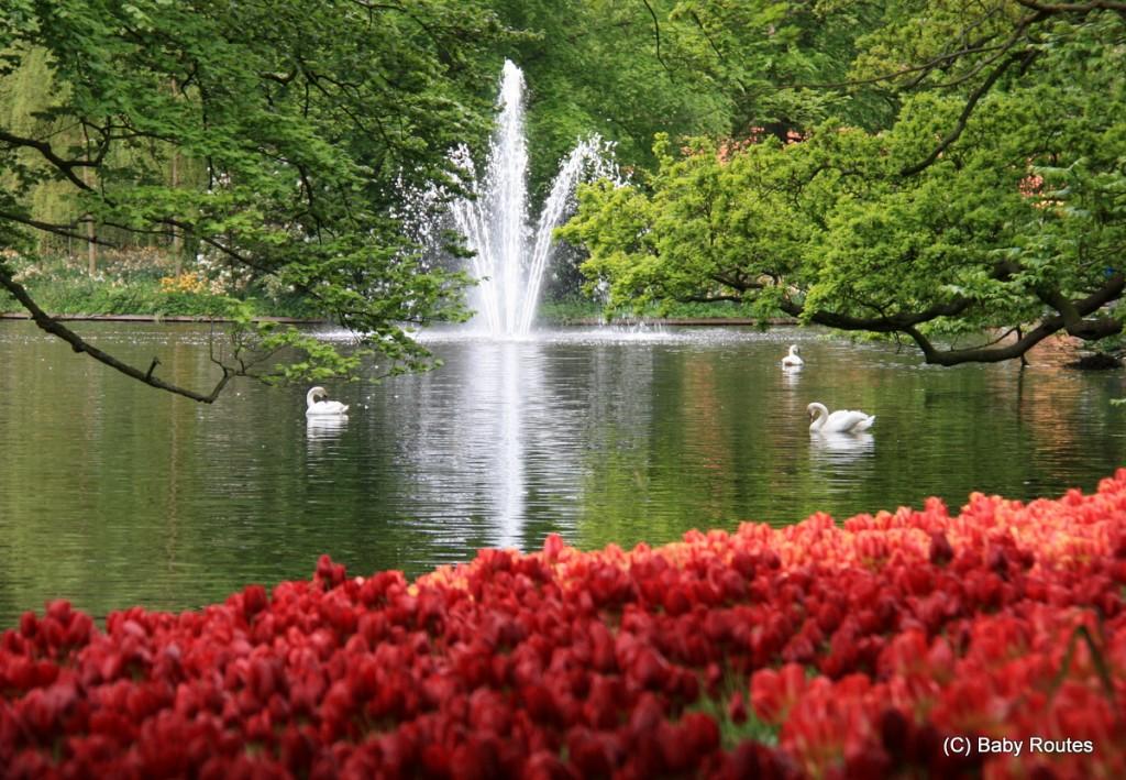 Tulips, Keukenhof, Holland