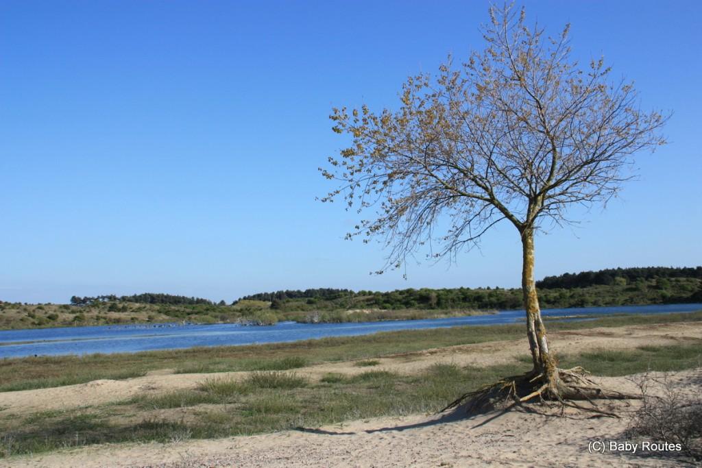 Walk Zuid-Kennemerland National Park