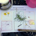 #30dayswild, nature colours scavenger hunt for toddlers