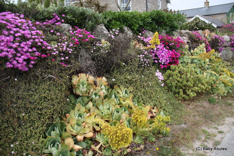 Just your average garden wall, Tresco, Isles of Scilly
