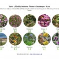 Scilly Summer Flowers Scavenger Hunt