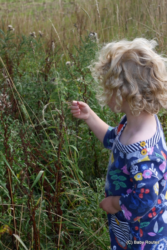Wildlife Wednesday : outdoor activities learning the letter 's', Baby Routes