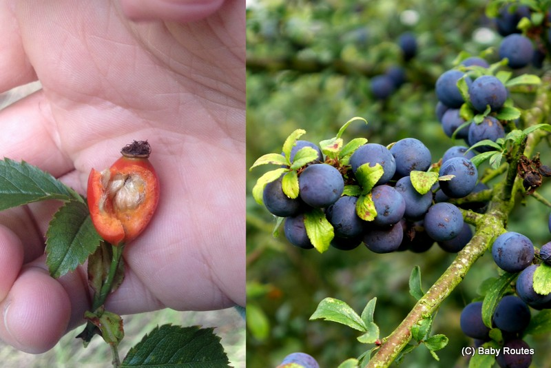 Seeds and Sloes, Wildlife Wednesday : outdoor activities learning the letter 's', Baby Routes