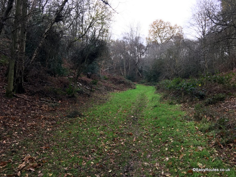 West Runton Heath & Woodland Walk, Norfolk