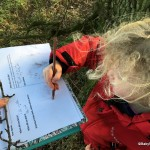 Winter Tree Identification Activity