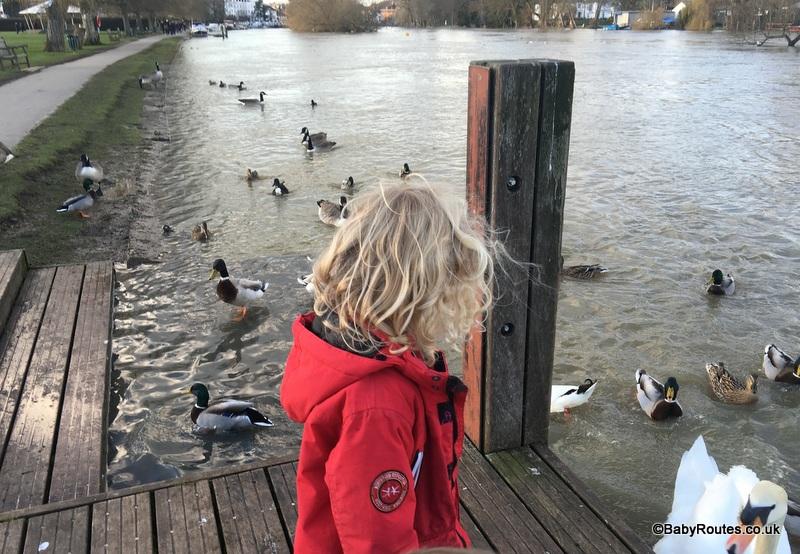 Feeding ducks, Henley on Thames