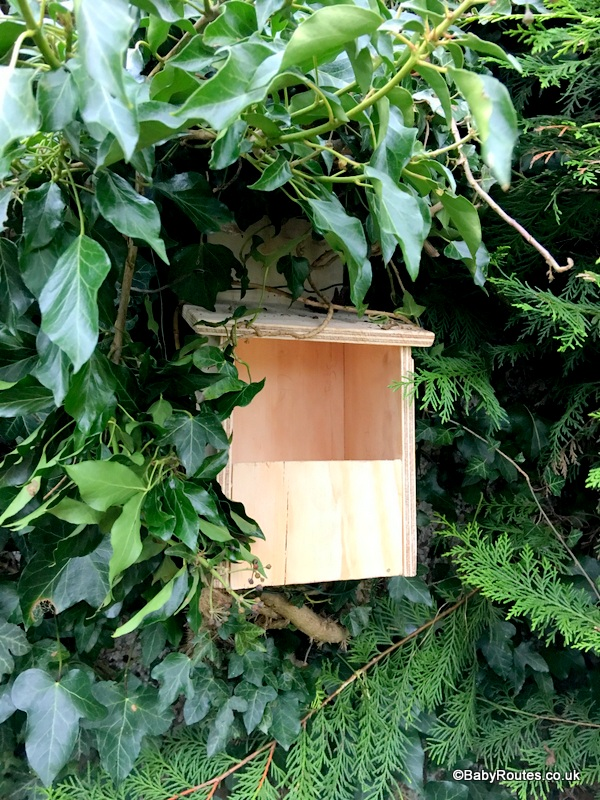 Making a nest box, National Nest Box Week