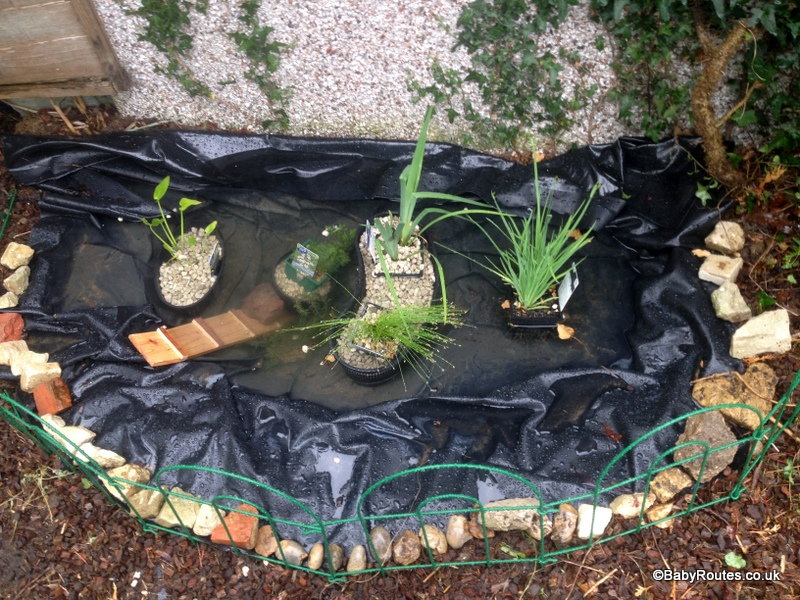 Pond baby routes for Pond builders uk