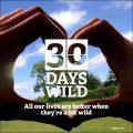 30 Days Wild Emma Bradshaw