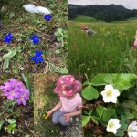 Identifying Swiss wild flowers - 30 Days Wild