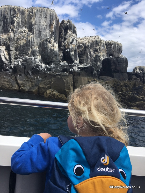 Farne Islands with children, Northumberland