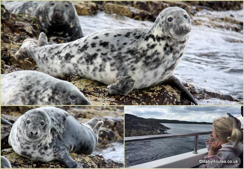 Seals, Farne Islands with children, Northumberland