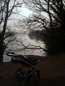 Lakeside view from trail at Dinton Pastures