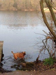Dog friendly walking at Dinton!