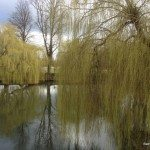 Willow trees by the Thames, Sonning