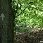 Woodland walking in Long Copse, Highmoor