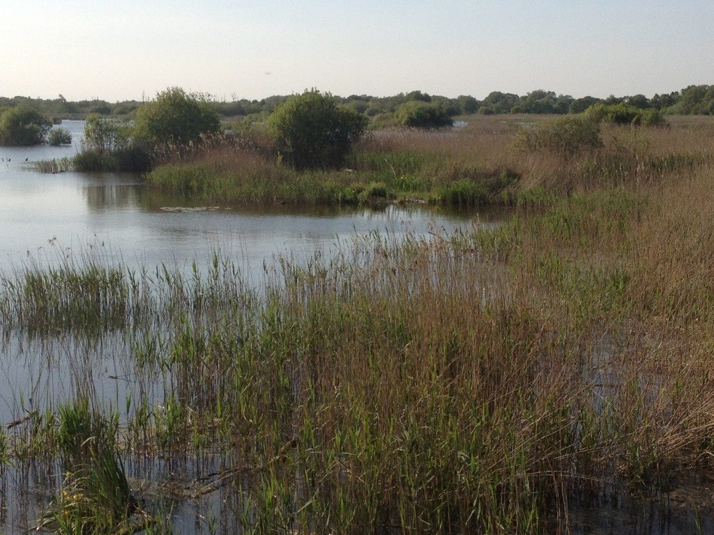 Shapwick National Nature Reserve, Somerset Levels
