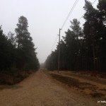 Photo of the Devil's Highway Roman Road, Swinley Forest, Bracknell