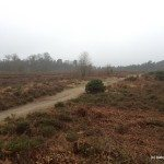 A photo of Caesar's Camp Iron Hill Fort, Swinley Forest, Bracknell.