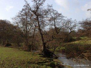 River Chew, Chew Valley Lake to Chew Magna circular walk